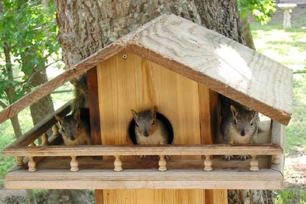 DIY Yard Decorations, Squirrel House Designs to Build and ...