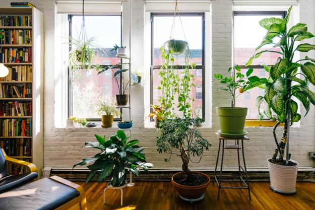Green decorating with plants ideas for every corner of - Interior decorating with plants ...