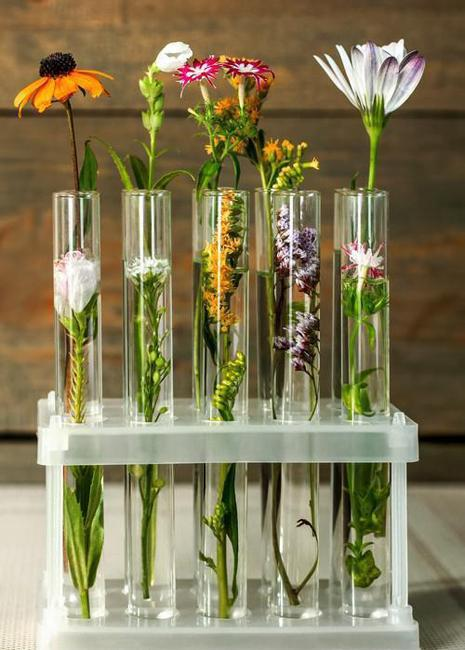 Original Home Decorations And Eco Gifts Test Tube Vases With Green Plants And Flowers