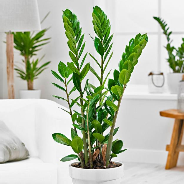 Decorating Dilemma House Plants: Modern Interior Decorating With Care Free Houseplants