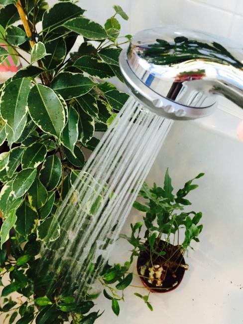houseplants taking shower
