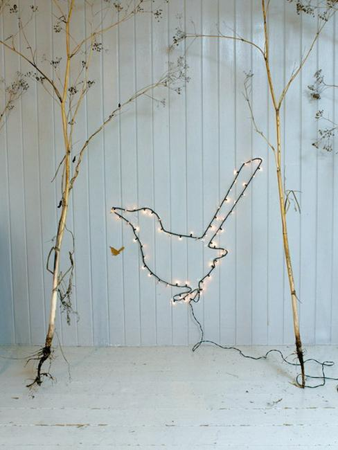 twigs lights bird image