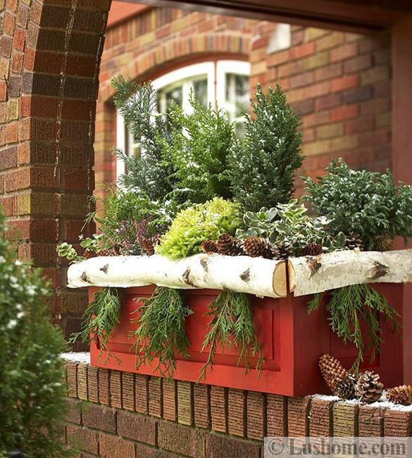 logs box evergreen plants