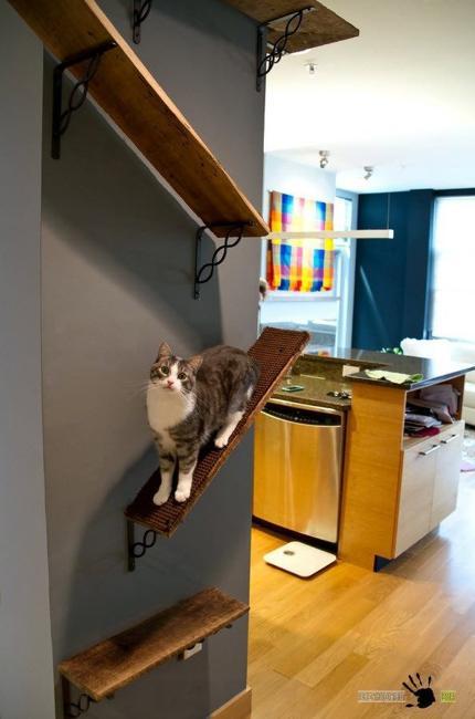 cat furniture wall shelves