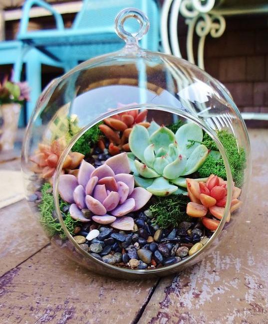 succulents glass terrarium