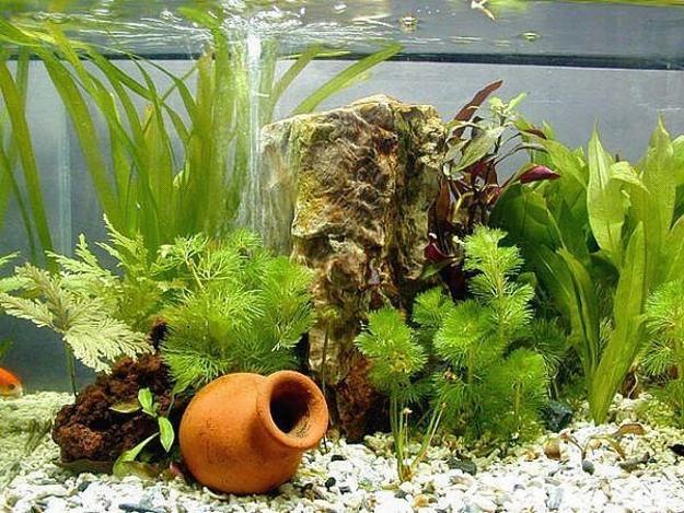 ceramic vase underwater plants