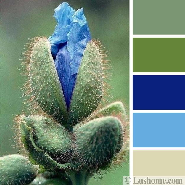 matching blue color palette