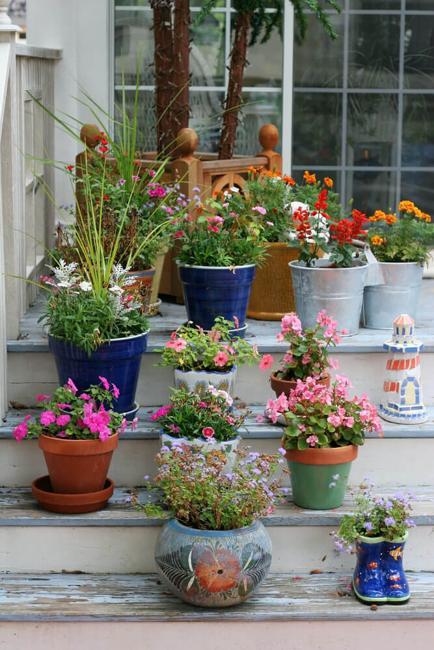 colorful pots summer flowers