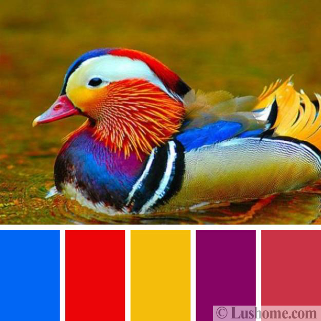 birds inspired design colors