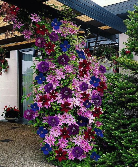 yard landscaping flowering vines