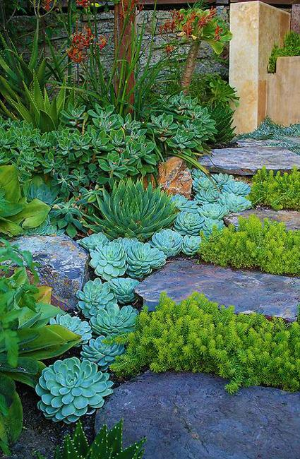 yard landscaping ideas stones succulents