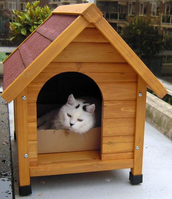 wood furniture pets